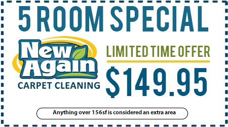 Specials Fort Wayne Carpet Cleaning Contractor