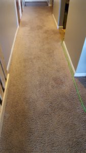 Indiana carpet clean project